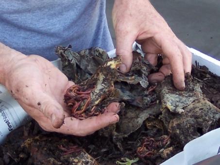 handful-of-worms.jpg